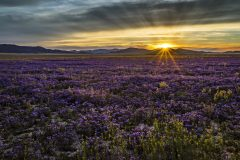 Reloaded twaddle – RT @Interior: Happy #firstdayofspring! Wildflowers at Carrizo Plain National Mon...