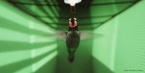 Reloaded twaddle – RT @audubonsociety: How do hummingbirds fly so fast and keep from crashing into ...