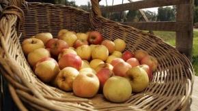 Reloaded twaddle – RT @latimes: Farmers market report: Apples are in season https://t.co/DcOs4TX8Yf...