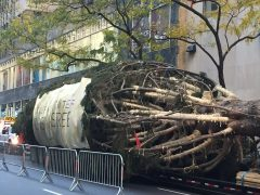 Reloaded twaddle – RT @TODAYshow: It's officially here! The Rockefeller Center Christmas tree arriv...